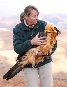 Sonja Krueger with Bearded Vulture