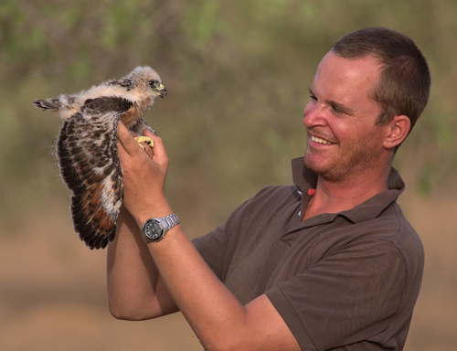 Ralph Buij with Grasshopper Buzzard nestling